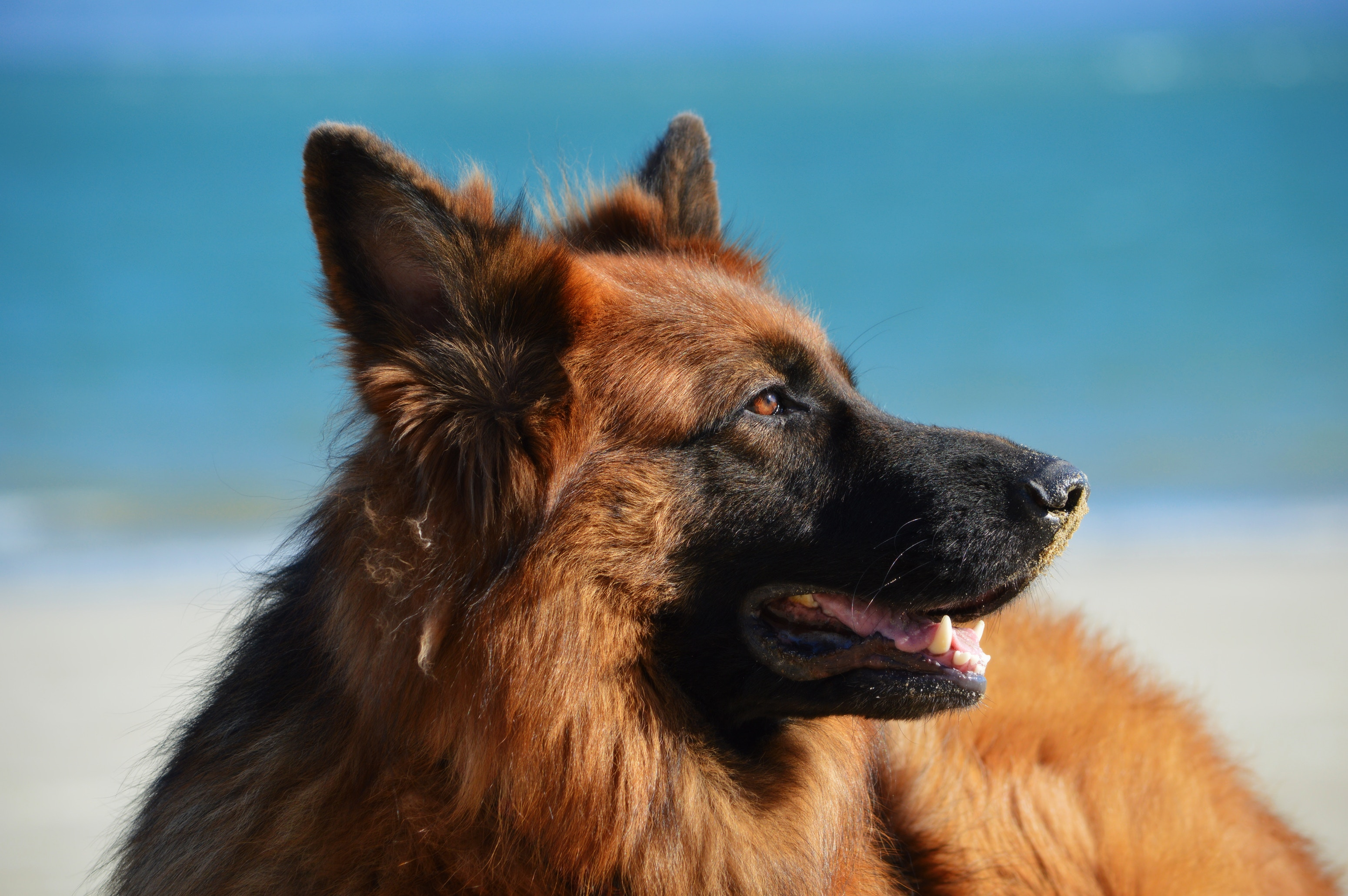 5 Ways Service Dogs Help Their Human Companions (Guest Post Days)